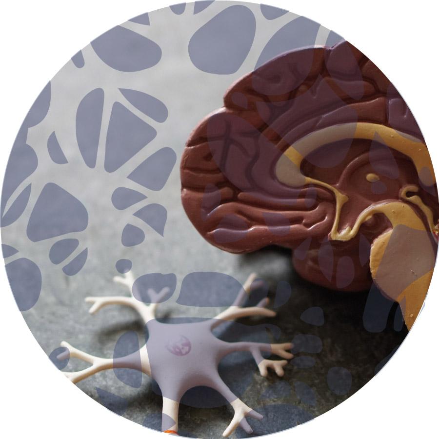 Ergotherapie-Schmid-fachbereiche-neurologie