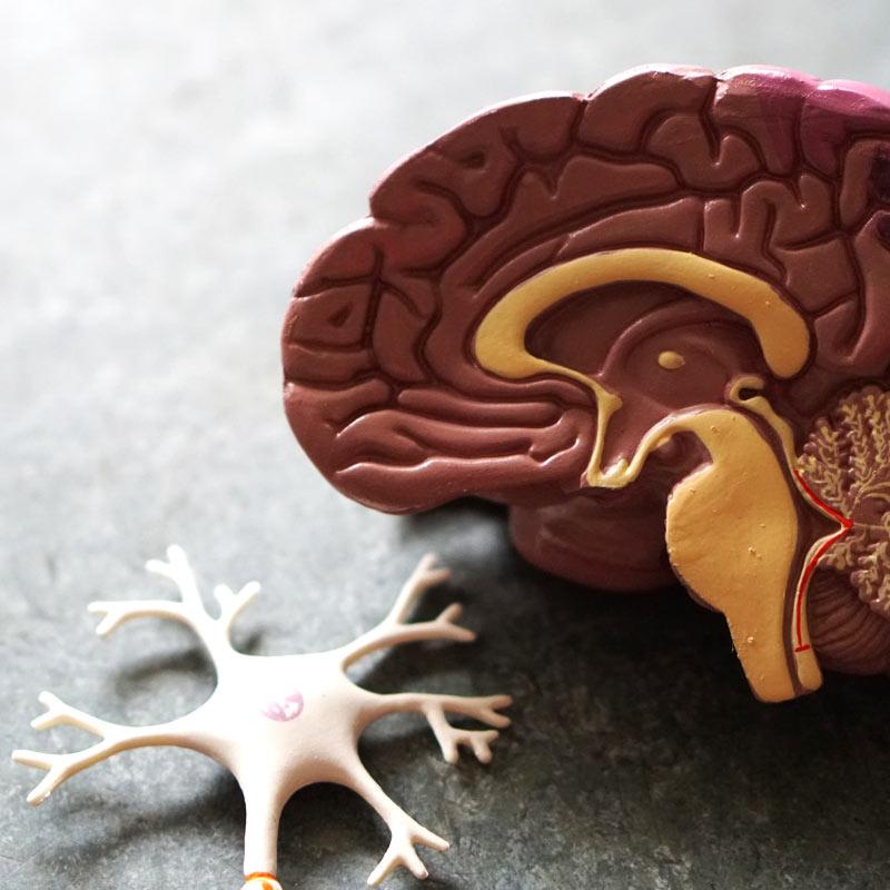 Ergotherapie-Schmid-neurologie
